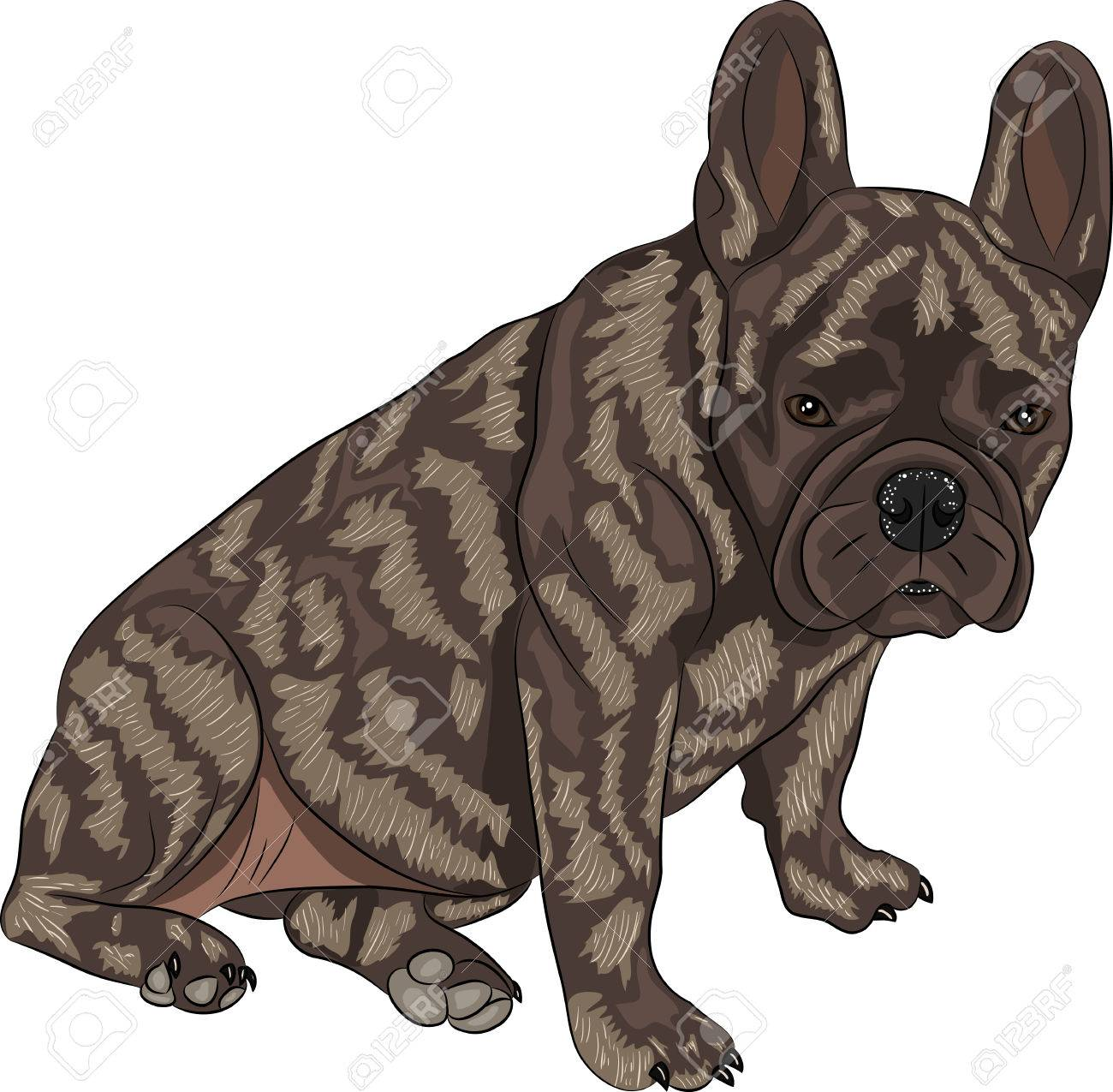 Awesome French Bulldog Dog Isolated On A Stockvector French Bulldog Dog Isolated On A Brindle Dog Breed Info Small Brindle Dog Breeds bark post Brindle Dog Breeds