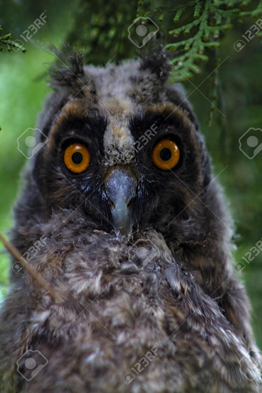 Fullsize Of Grey Owl Juniper