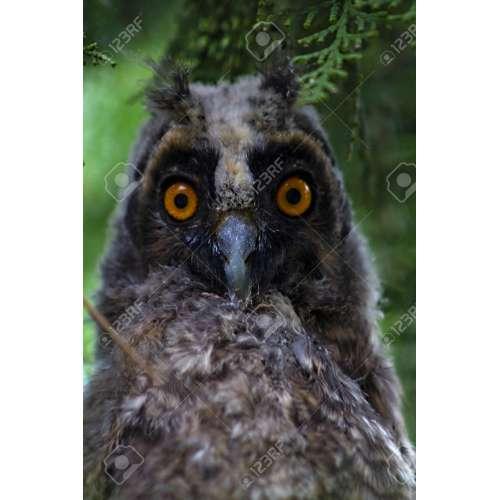 Medium Crop Of Grey Owl Juniper