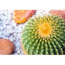 Small Crop Of Golden Barrel Cactus
