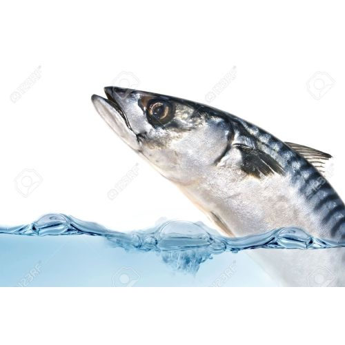 Medium Crop Of Fish Jumping Out Of Water