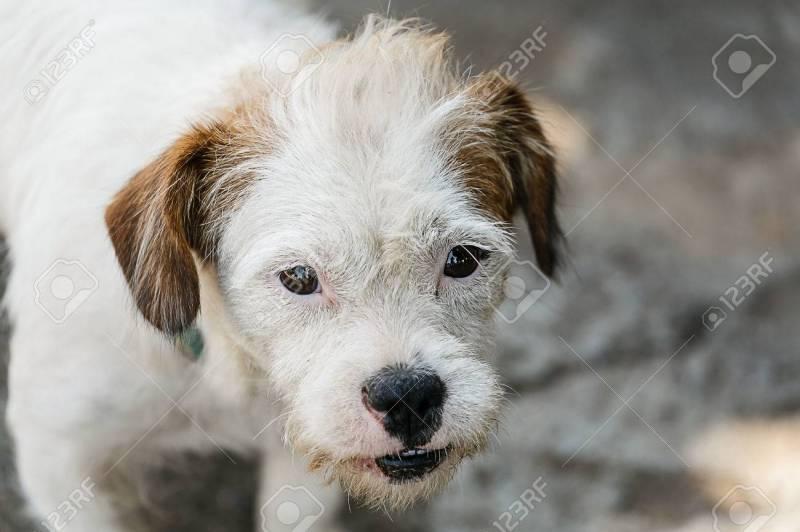 Large Of White Dog Breeds