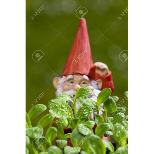 Medium Crop Of Small Garden Gnome
