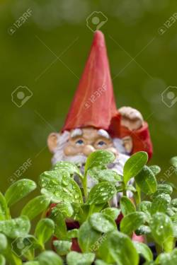 Marvellous Upperarea Copy Space Cheap Small Garden Gnomes Small Garden Gnomes Small Garden Gnome Is Behind Borage Seedlings Small Garden Gnome Is Behind Borage Seedlings Copy Space