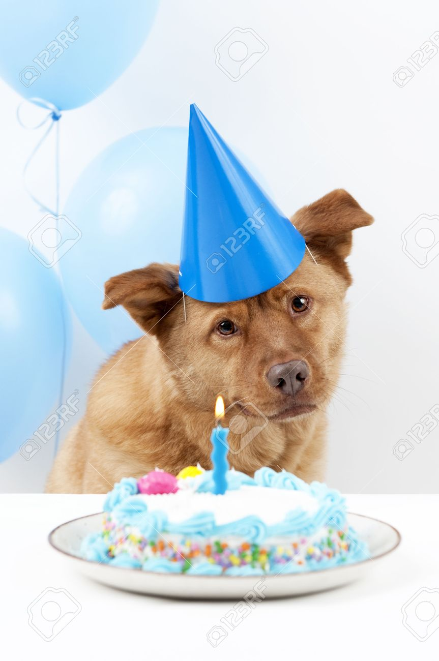 Formidable Balloons Stock Cake Balloons Stock Photo Dog Birthday