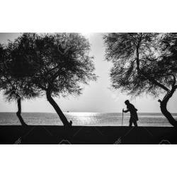 Captivating Woman Who Walks On Beach Walking Stick Between Trees Stockphoto Woman Who Walks On Beach Walking Stick Between Trees Walking Stick Kale Tree Collards Walking Stick Tree S