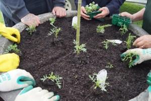 planting-06
