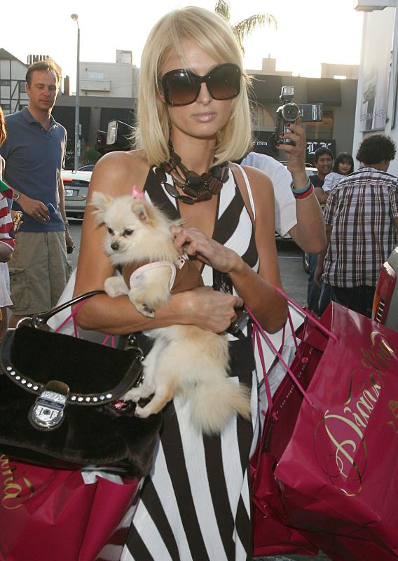 PARIS HILTON DOG