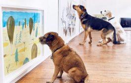 Ekspozitë arti për qen