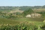 Randobrava, fshati i njohur i hardhive të rrushit ka një mori kërkesash