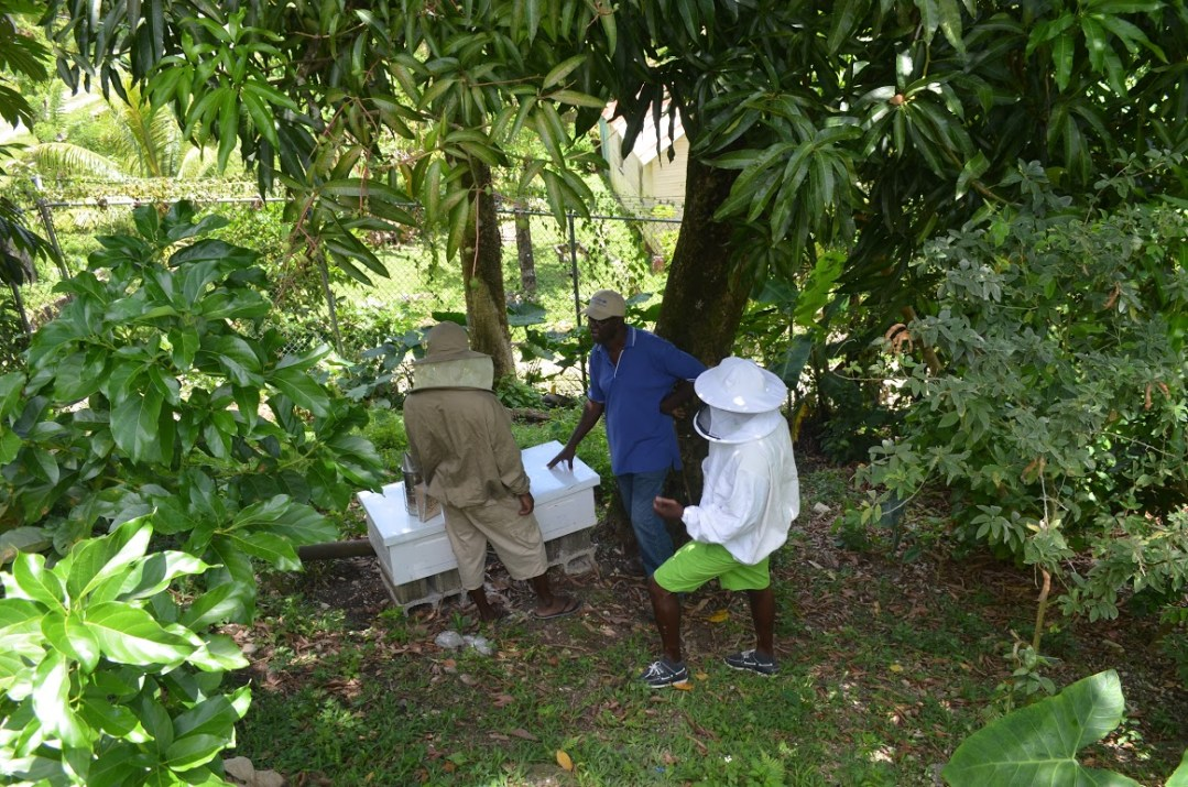 Bee keeping project