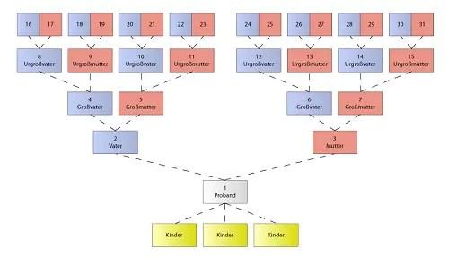 Der Aufbau einer Ahnentafel