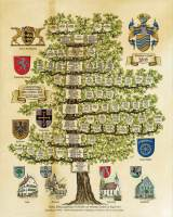 7) Stammbaum koloriert