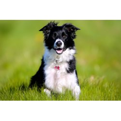 Small Crop Of Healthiest Dog Breeds