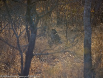 Finding Your Big Five Leopard
