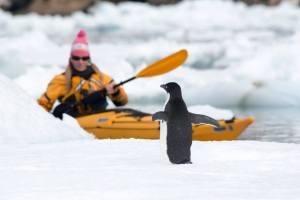 Brooke sea kayaking with penguins  (photo credit Jonathan Green)