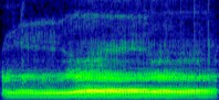 A spectrogram of an elephant's rumble