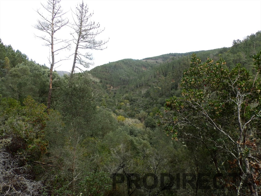 riverside valley for sale in Góis