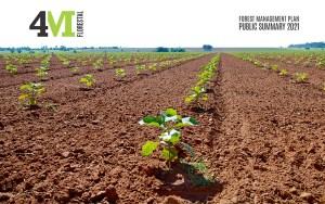 4M Agroflorestal - Resumo Publico 2021.cdr