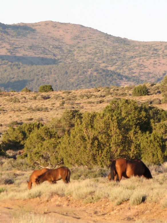 VA range wild horse (Photo ©Anne Novak)
