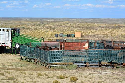 PM WY BLM Corral small