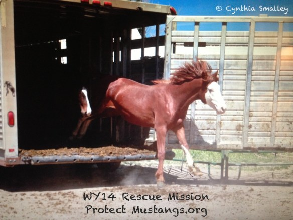 PM Ghost Dancer WY14 Rescue