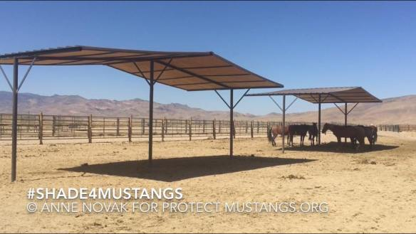 PM Shade Structures mustangs PVC #Shade4Mustangs