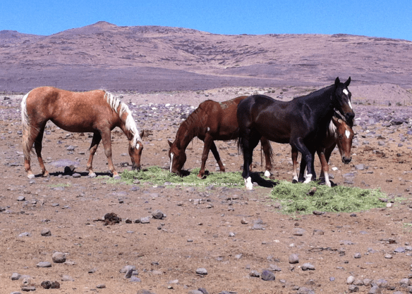 pm-litchfield-wild-horses