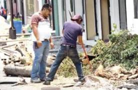 Derriban árboles sin permiso del Departamento de Ecología de Orizaba