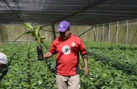 Tecnificará  Ayuntamiento de Córdoba 18 viveros comunitarios