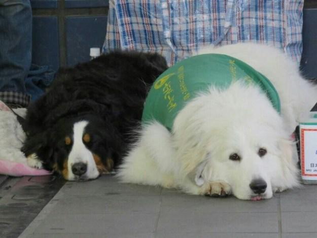 セラピー犬たちがお待ちしてます!