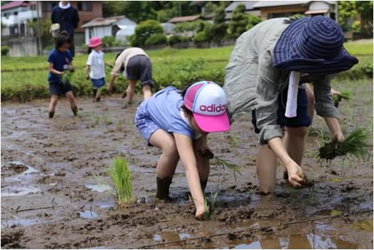 親子で田植えをする参加者