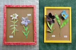 クリソツ植物標本 イメージ