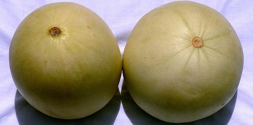 melons500.JPG
