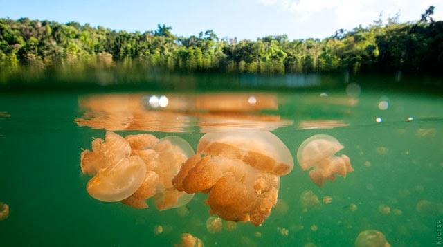 el lago de las medusas