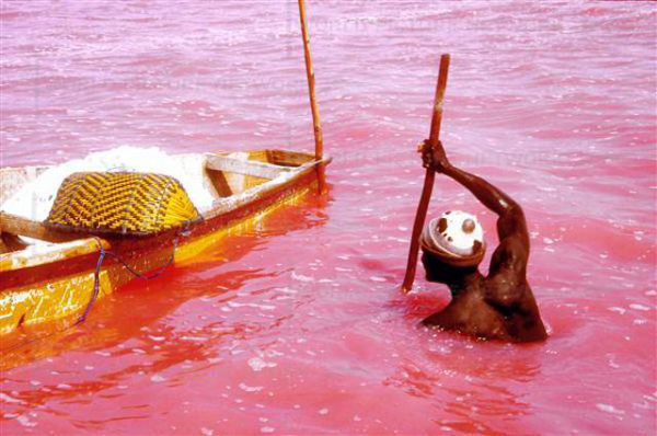 32. salt fisherman to work. Ten A twelve hours per day Oumar is extracting the salt of the pink lake. its only protection vis-a-