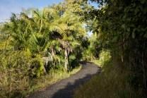 Path through the rainforest at Victoria Falls