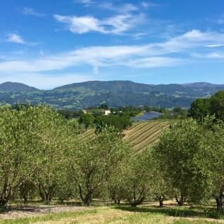Olive-trees-vineyards-solar-panels-winery-chateau