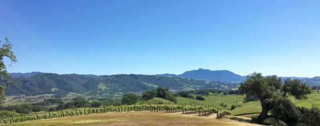 Vista-Point-Vineyard-View
