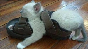 29 Photos Of Cats Sleeping In The Weirdest Places And Positions