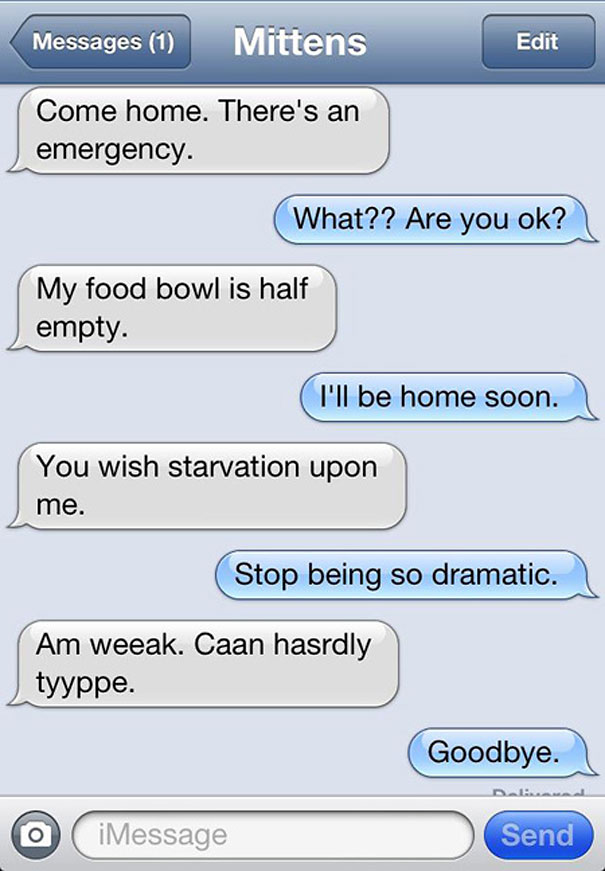 33 Texts A Cat Would Send If Cats Could Text
