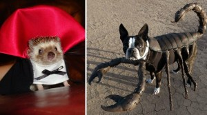 80 Animals That Are Celebrating Halloween Early This Year