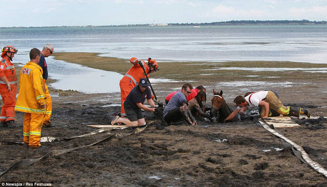 """Fire lieutenant Roger Buckle said the mud was """"like quicksand."""""""