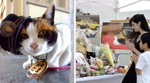 Thousands Attend Funeral Of Japan's Famous Feline Stationmaster In Public Outpouring Of Grief