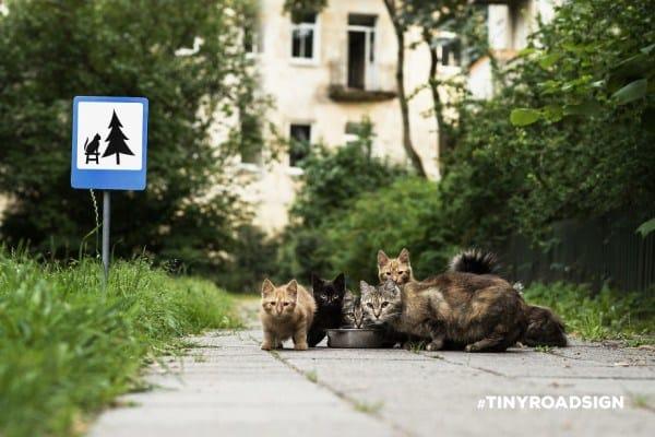55b943e3bf1d9 - Hedgehogs, Cats, And Ducks Get Own Tiny Crosswalks In Lithuanian Town Where All Creatures Are Equal