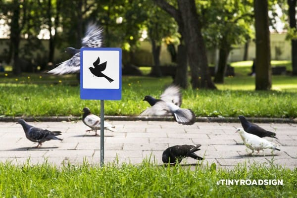 55b943e449412 - Hedgehogs, Cats, And Ducks Get Own Tiny Crosswalks In Lithuanian Town Where All Creatures Are Equal