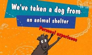 shelterdogcomic