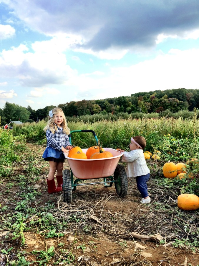 pumpkin picking 10