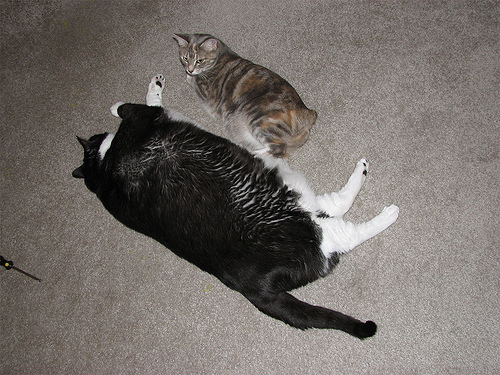 Cute funny cats - If this were a beach, humans would be trying to push you back out to sea.