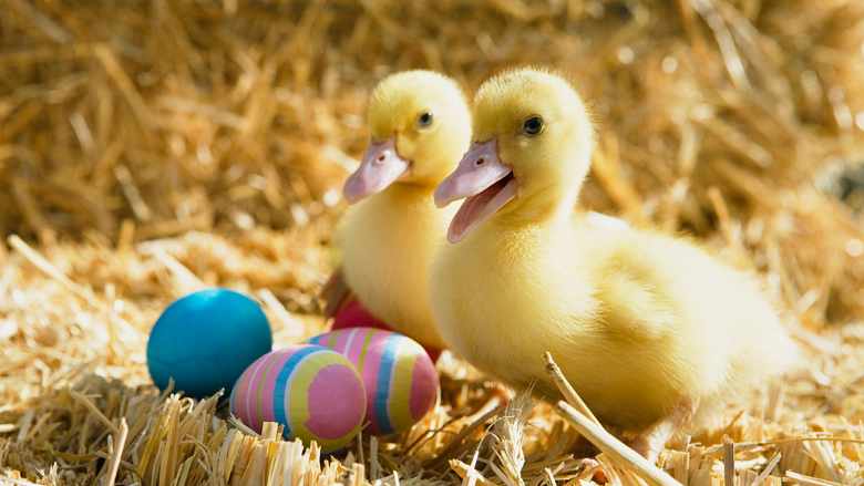 easter wallpapers windows 8